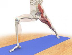 El Psoas en Yoga. Cuál es su importancia